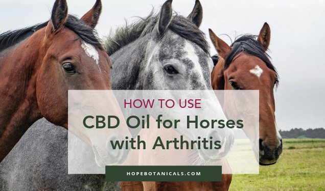 how to use cbd oil for horses with arthritis