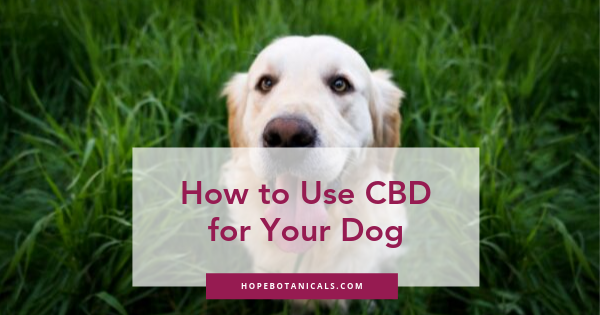 How to Use CBD for your dog