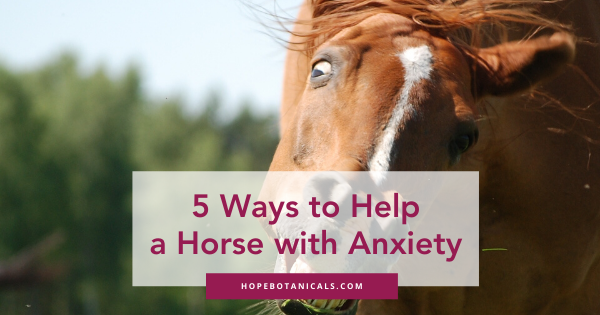 anxious horse with the words 5 ways to help a horse with anxiety