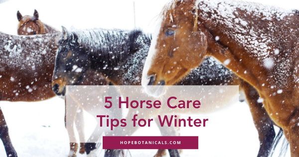 How to care for your horse in winter